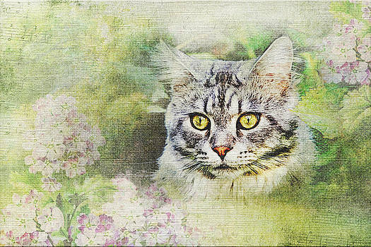Cat in garden by Irene Beumer-Zanini