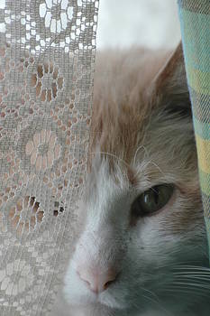 Cat in the Curtain by Lonnie McGlothen