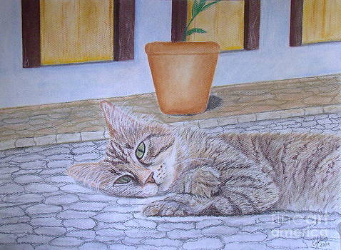 Cat in the street by Cybele Chaves