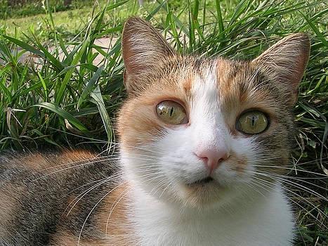 Cat Lens  by Zsuzsa Balla