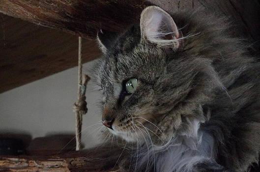 Cat by Martin Bellmann