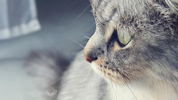 Cat by Noemie Grange