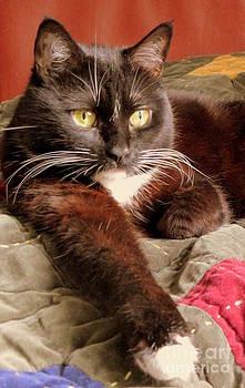 Cat On Velvet by Maria Scarfone