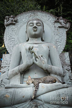 Cat sleeping on the lap Buddha statues. by Tosporn Preede