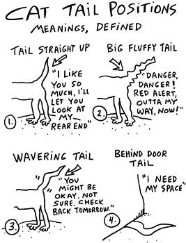 Cat Tail Positions by Molly Brandenburg