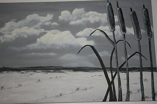 Cat Tails on the CAPE by Donna Jeanne  Carver