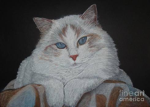 Ragdoll Cat with blanket by Cybele Chaves