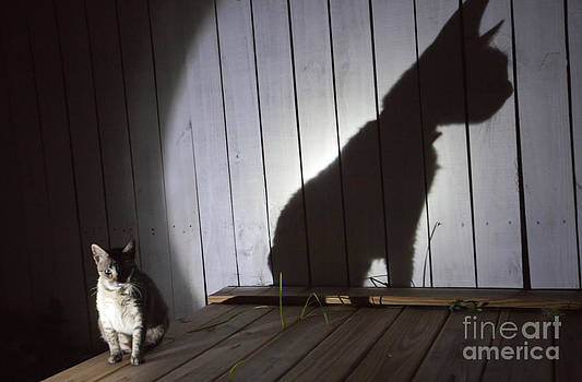 Julie Dermansky - Cat With Shadow