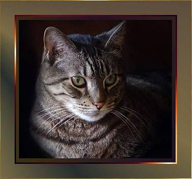 Cat2 by Ilona Stefan