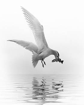 Nina Bradica - Catch of the Day-2
