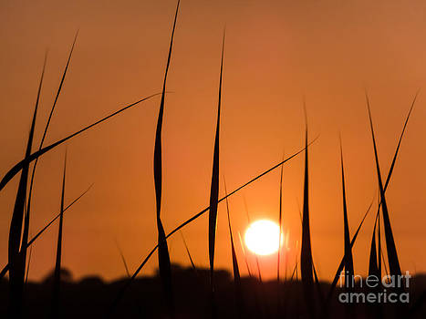 Catching The Last Of The Sun by Corinne Johnston