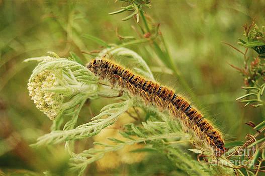 Caterpillar by Christo Christov