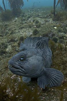 Catfish. by Erlendur Gudmundsson