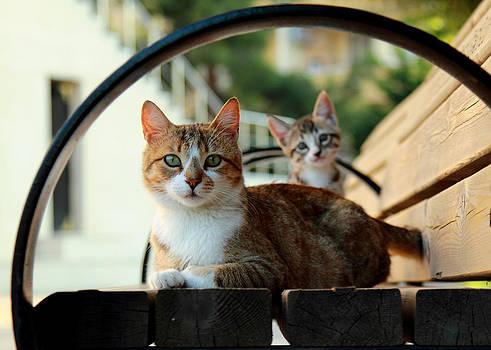 Cats Family by Zafer GUDER