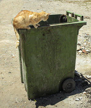 Patricia Hofmeester - Cats on and in garbage container