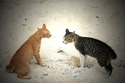 Cats Will Fight by Yusron Rohim
