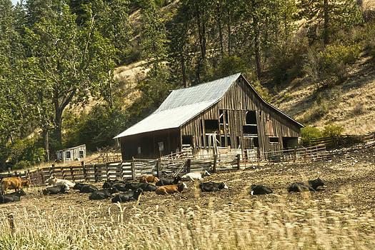 Randall Branham - Cattle Barn Lot One standing