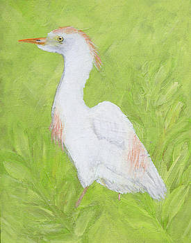 Cattle Egret by Lindy Brown