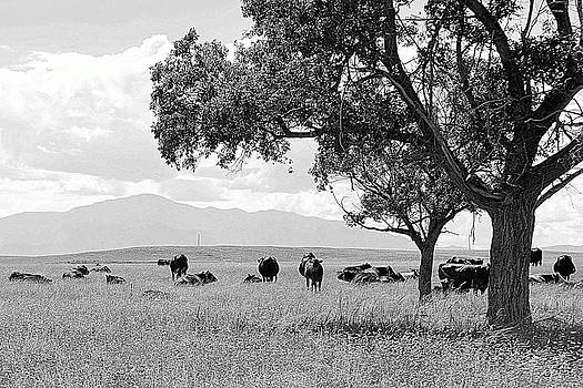 Cattle Ranch In Summer by Clarice  Lakota