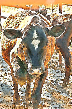 Artist and Photographer Laura Wrede - Cattle Round Up
