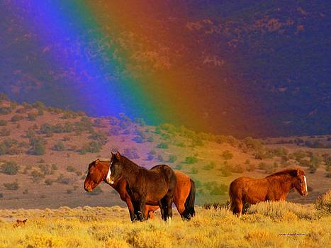 Caught In A Rainbow  by Jeanne  Bencich-Nations
