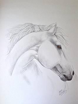 Cavallo by Joette Snyder