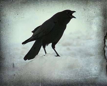 Gothicolors Donna Snyder - Cawing Winter Crow