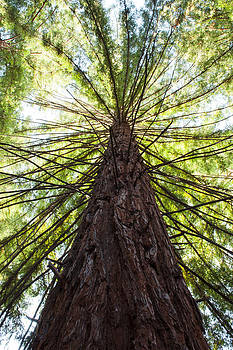 Cedar Grove by Darren  Names