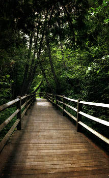 Michelle Calkins - Cedar Pathway 2.0