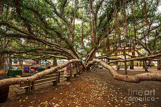 Jamie Pham - Center Court - Banyan Tree Park in Maui.