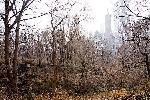 Central Park in Winter by Michael Fahey