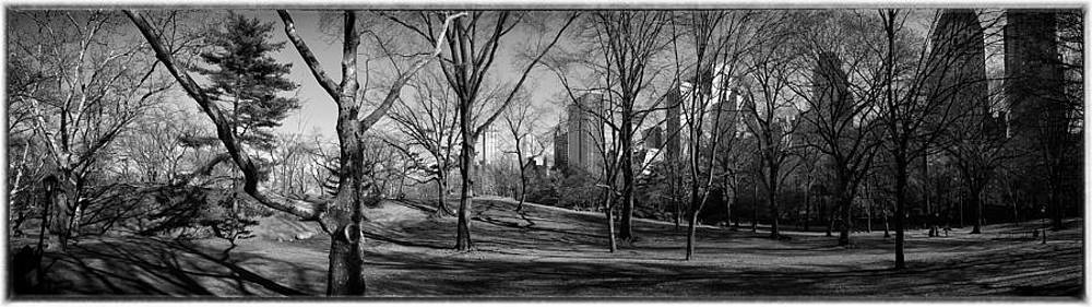 Central Park by Peter Aitchison