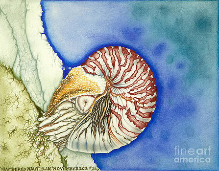 Chambered Nautilus by Taryn  Libby
