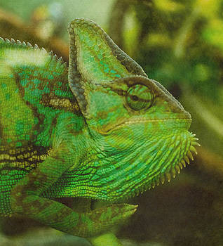 Chameleon by Lisa Brandel