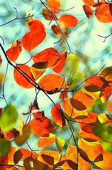Changing Colors by Heather Bridenstine
