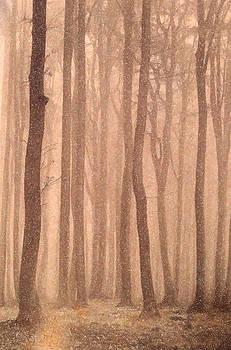 Angela A Stanton - Changing Seasons Winter