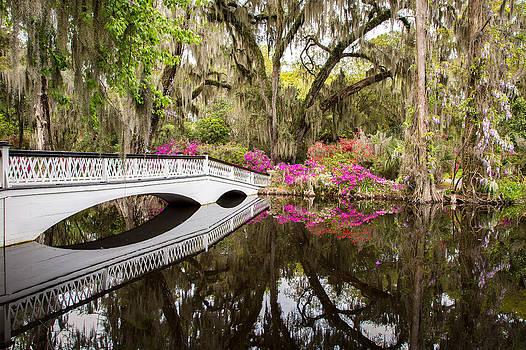 Charleston Garden Photo - Live Oaks and Azaleas by Bill Swindaman