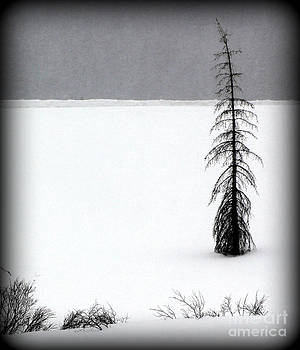 Charlie Brown's Christmas Tree by C Ray  Roth