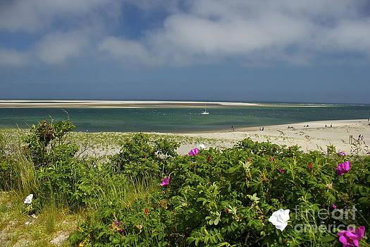 Amazing Jules - Chatham Beach