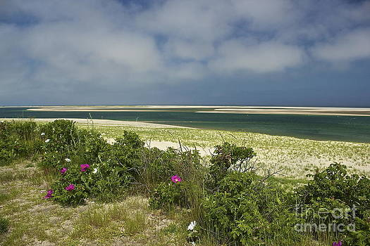 Amazing Jules - Chatham Beach in Bloom