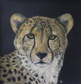 Cheetah by Barbara Bird