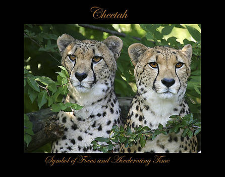 Cheetah Symbol of by Marty Maynard