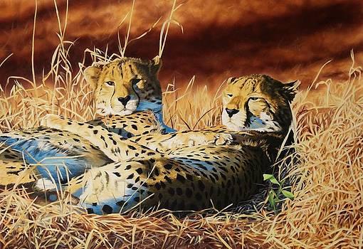 Cheetahs by Julian Wheat