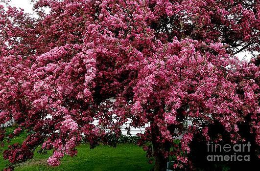 Gail Matthews - Cherry Blossom Tree Triumphant