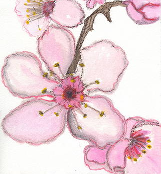 Cherry Blossoms # 1 by Sheba Goldstein