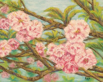 Cherry Blossoms by Rebecca Prough