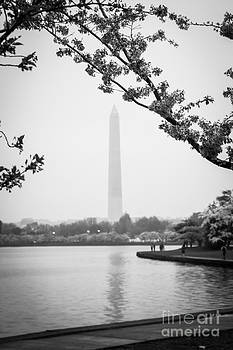 Cherry Blossoms With A View by Lee Wellman