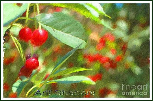 Cherry In My Garden 2007 by Arif Zenun Shabani