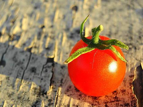 Cherry Tomato by Gina Harmeyer