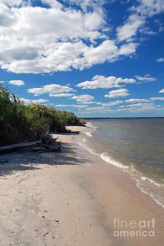 Chesapeake by Waverley Dixon